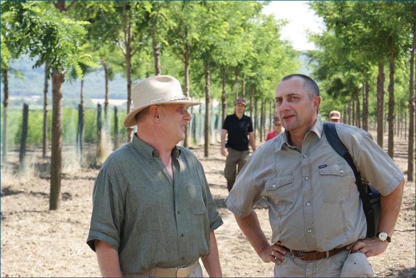Diversifikation in edelholz schwarznuß robinie kirsche und maulbeere